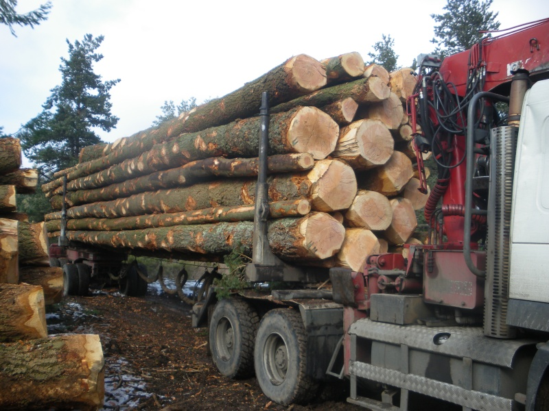 forestiers de roger : première partie - Page 39 Mp_nav65