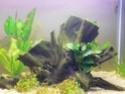 algues Mon_aq14