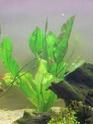 algues Mon_aq15