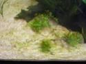 algues Mon_aq16
