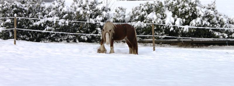L'écurie de Vilex sous la neige Novemb10