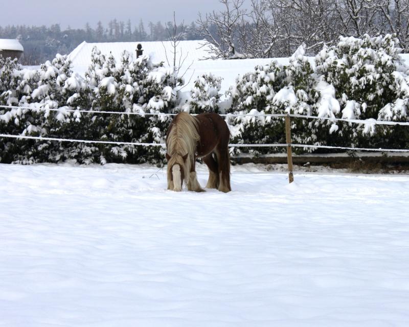 L'écurie de Vilex sous la neige Novemb11