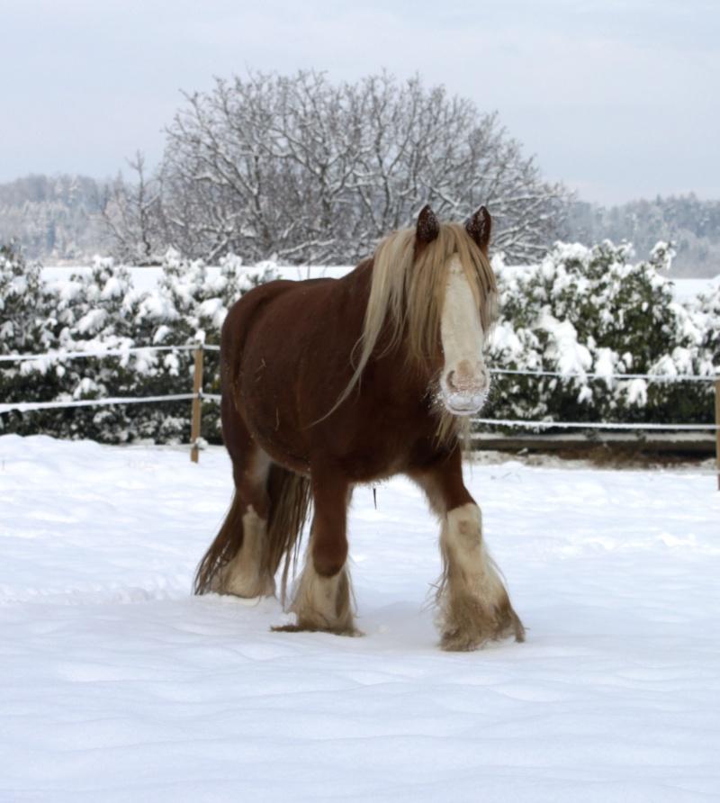 L'écurie de Vilex sous la neige Novemb12