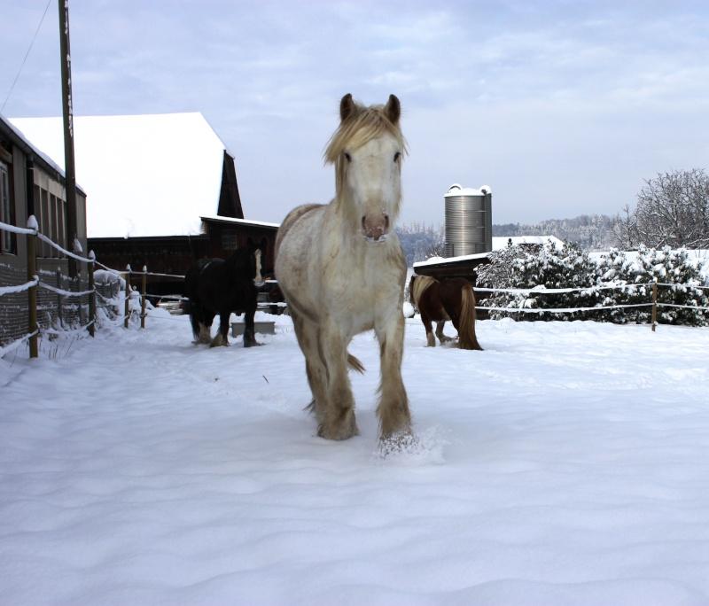 L'écurie de Vilex sous la neige Novemb13