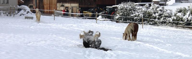 L'écurie de Vilex sous la neige Novemb15