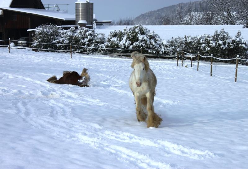 L'écurie de Vilex sous la neige Novemb16