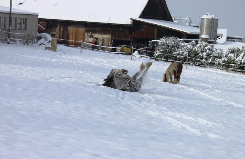 L'écurie de Vilex sous la neige Novemb17