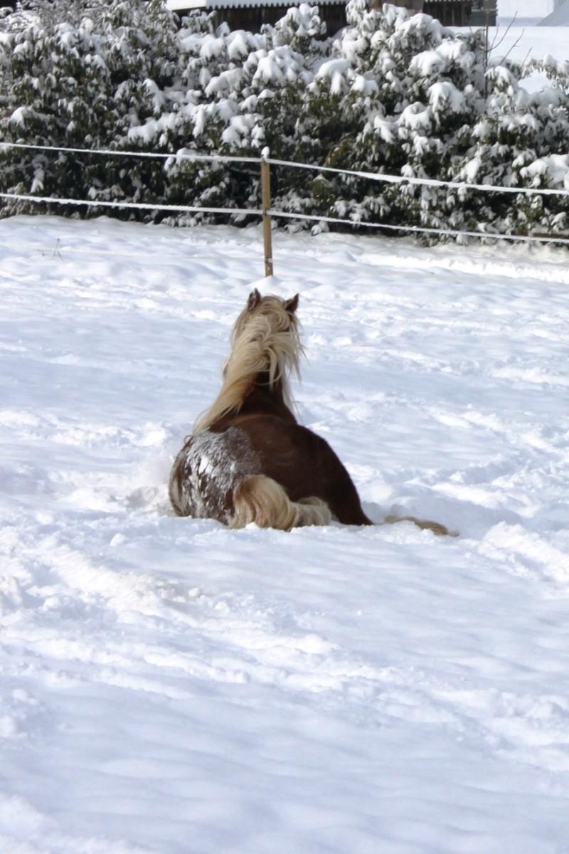 L'écurie de Vilex sous la neige Novemb18