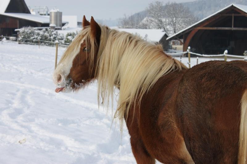 L'écurie de Vilex sous la neige Novemb20