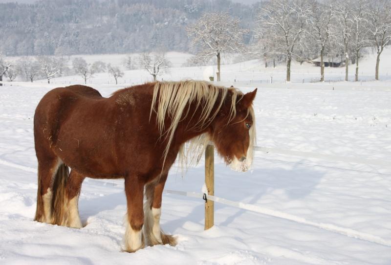 L'écurie de Vilex sous la neige Novemb21