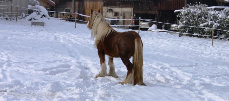L'écurie de Vilex sous la neige Novemb22