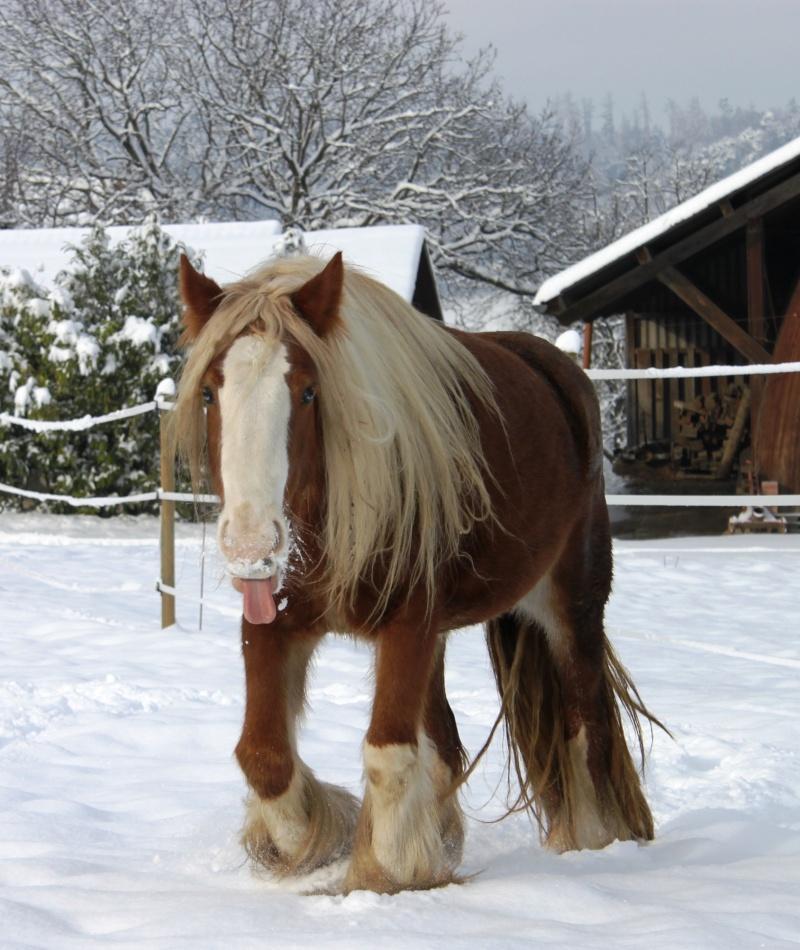 L'écurie de Vilex sous la neige Novemb23