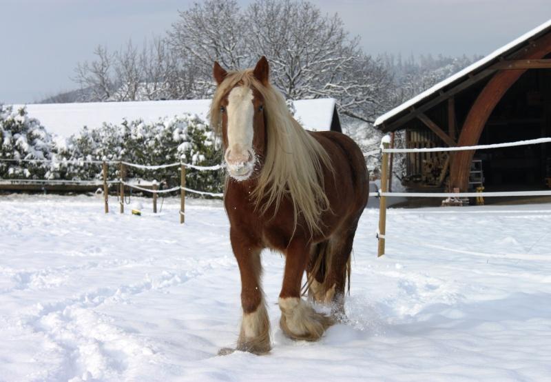 L'écurie de Vilex sous la neige Novemb24