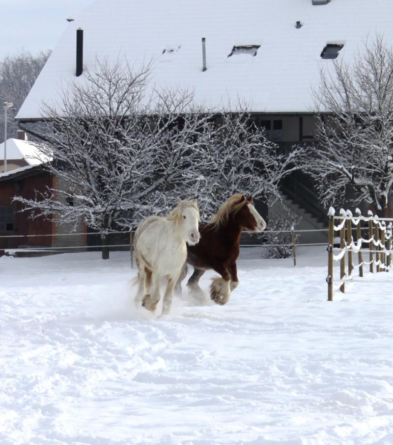 L'écurie de Vilex sous la neige Novemb27