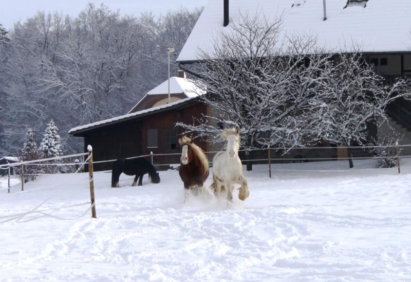 L'écurie de Vilex sous la neige Novemb29
