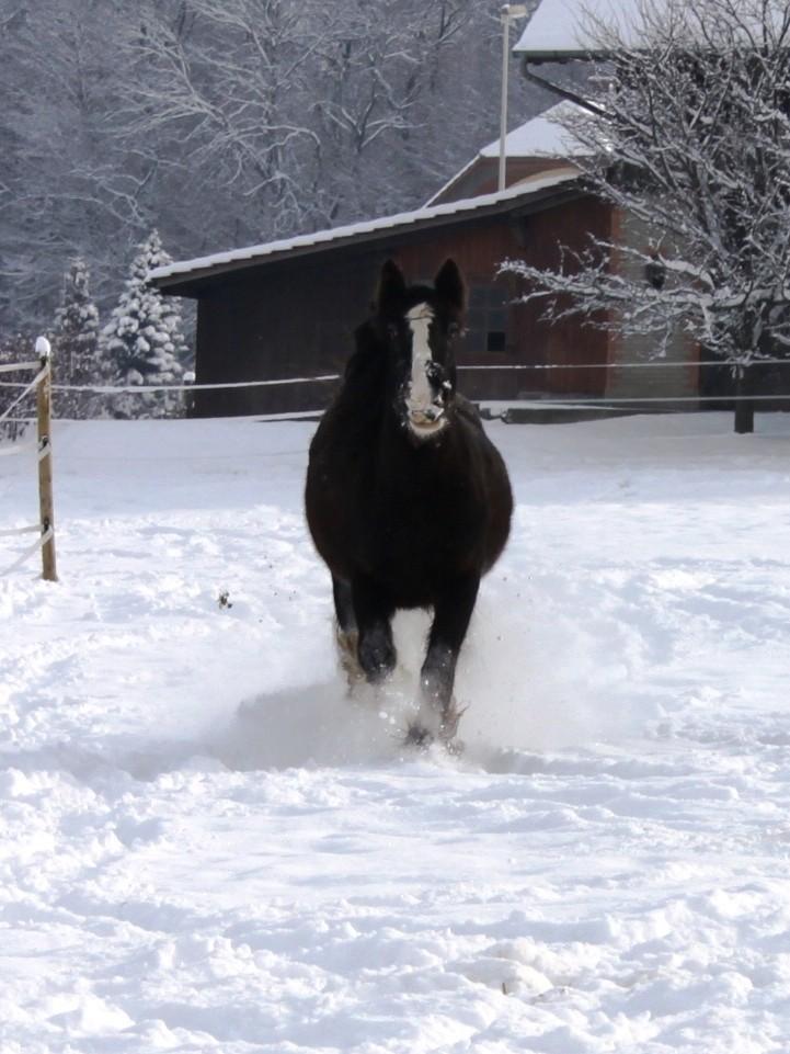 L'écurie de Vilex sous la neige Novemb33