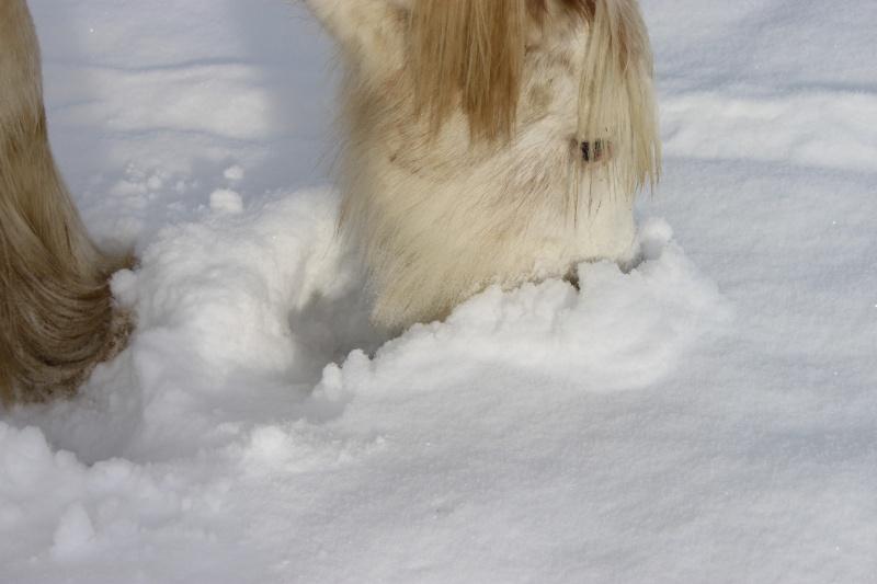 L'écurie de Vilex sous la neige Novemb34