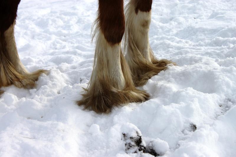 L'écurie de Vilex sous la neige Novemb36