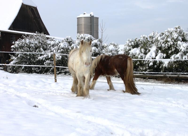 L'écurie de Vilex sous la neige Novemb38