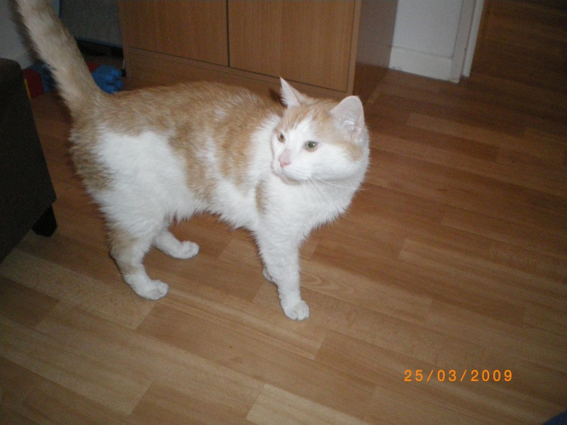 Kenny le chat de ma belle soeur Imgp0510