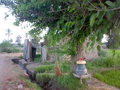 صور متفرقة من مدينة الكردي 23922910