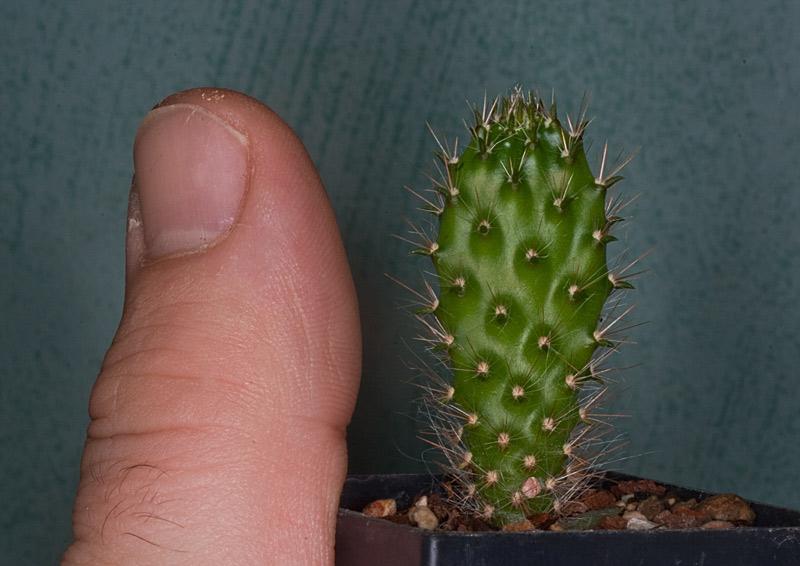 Kaktus Samen Mix aus´m Baummarkt ... - Seite 3 Baumar14