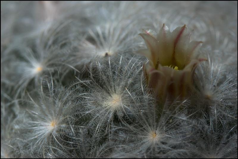 Winterblüten Mammi-17