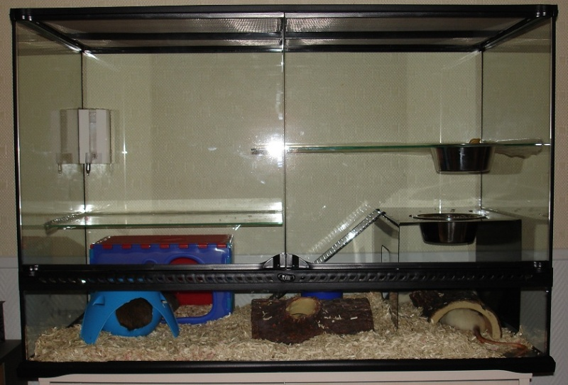 Vends Terrarium pouvant contenir 8 rats, sur PARIS. Dsc01410