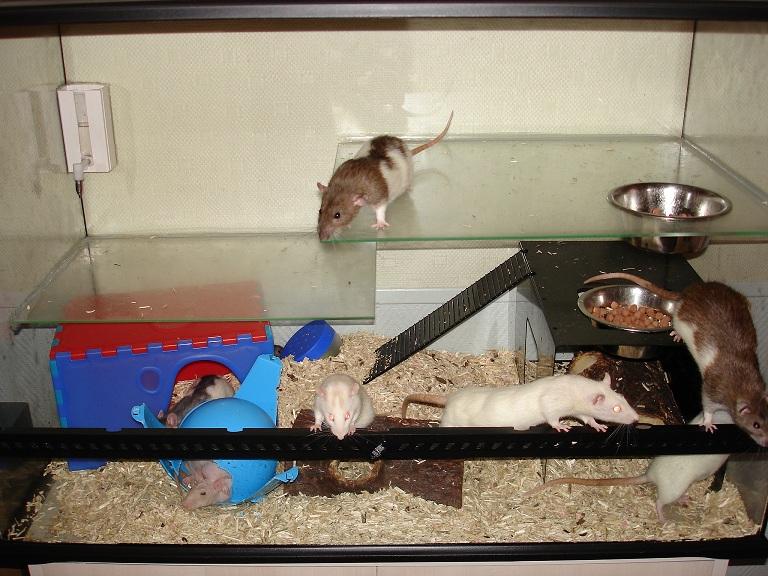 Vends Terrarium pouvant contenir 8 rats, sur PARIS. Dsc01412