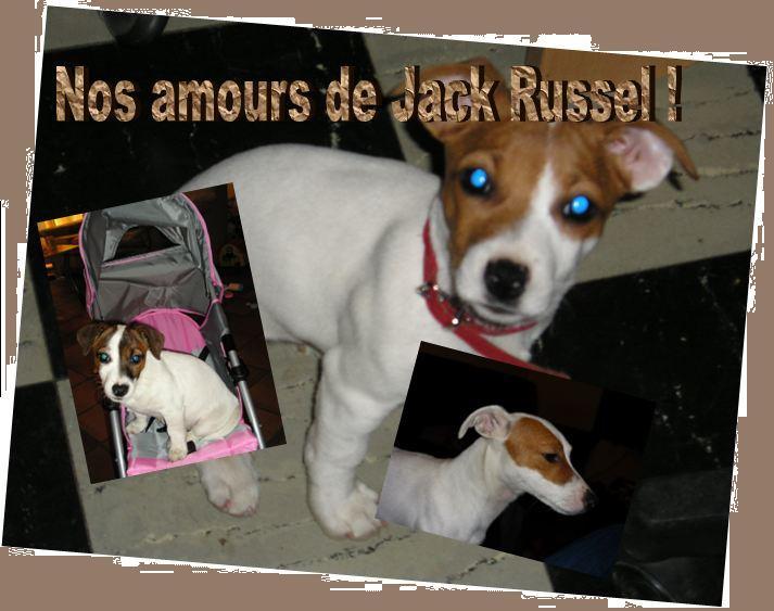 Nos amours de Jack Russel