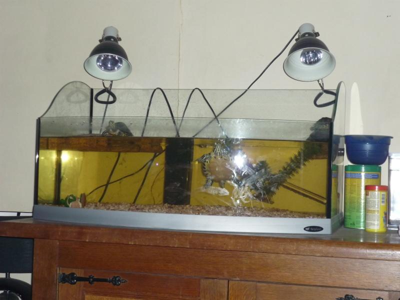 Aquariu + tortues P1020418
