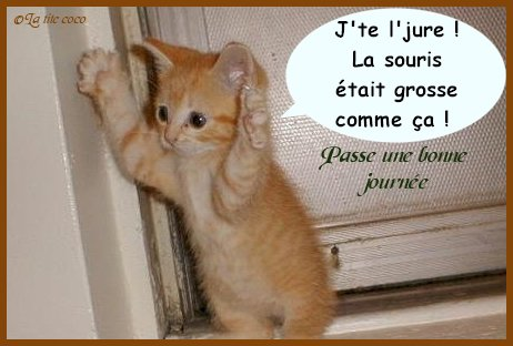 trombinoscope special animaux Chat_m10