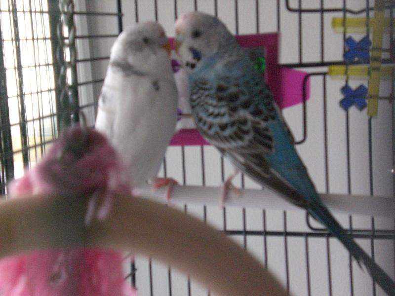 Benjy & Louna Cimg1210