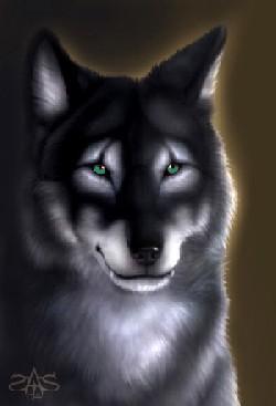 Shyska, louve de l'ombre Loup_m11