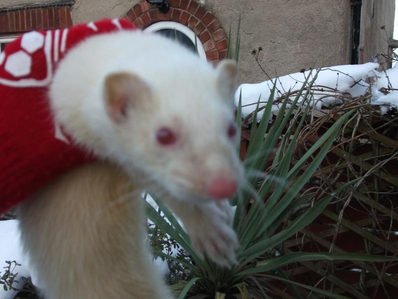 Ferret Hutch rescue 2   Ferret35