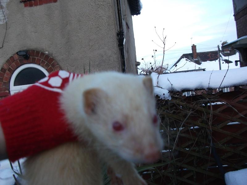 Ferret Hutch rescue 2   Ferret40