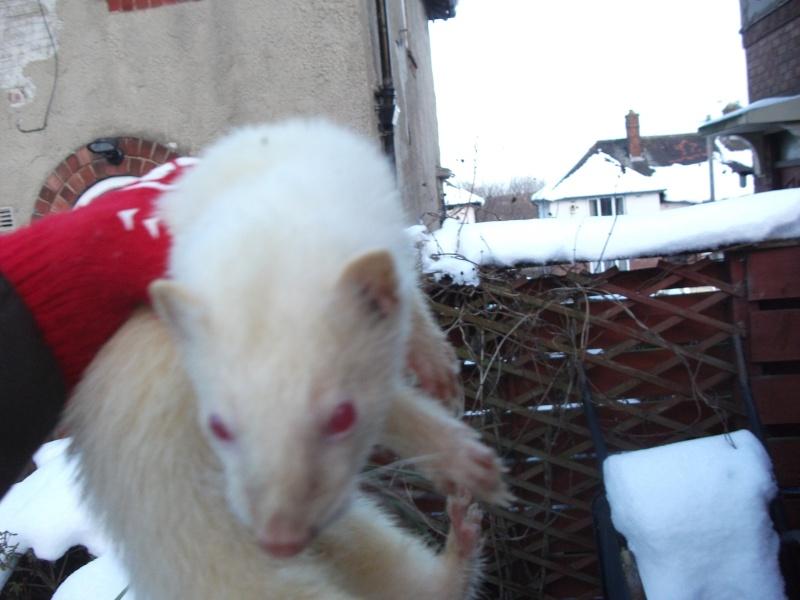 Ferret Hutch rescue 2   Ferret42