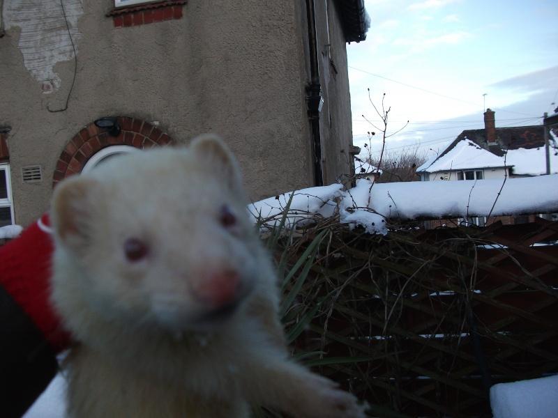 Ferret Hutch rescue 2   Ferret45