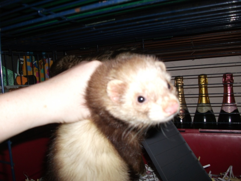 Ferret hutch rescue updated 22/1/2011 May_2015
