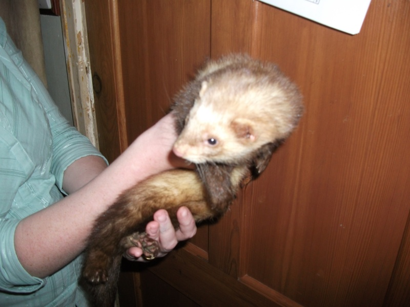Ferret hutch rescue updated 22/1/2011 May_2016
