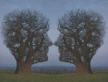 Illusions Trees10