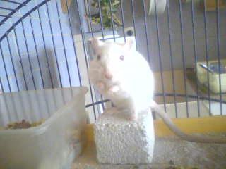 Ma petite LoLa Lola10