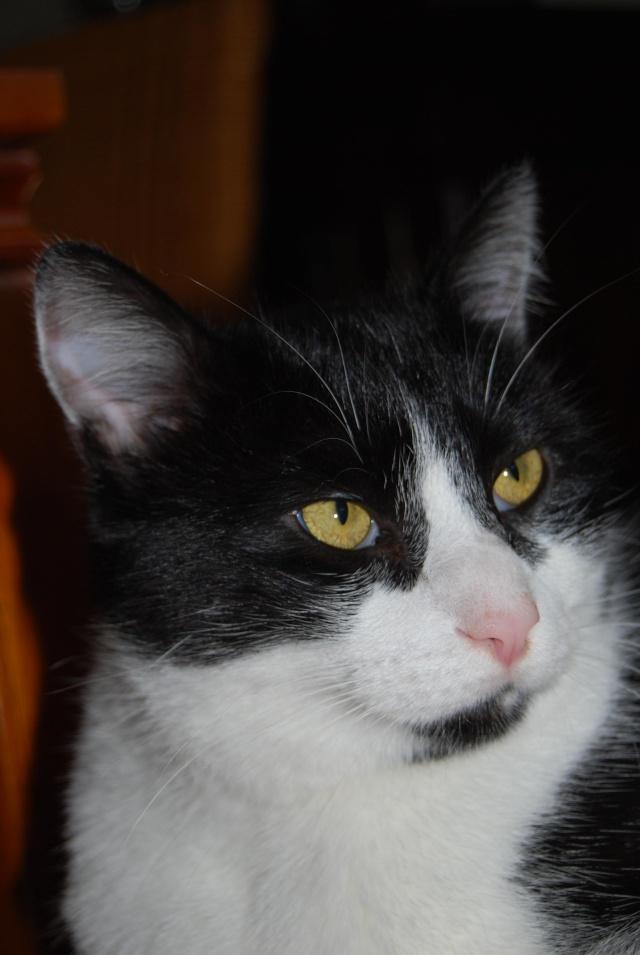 presentation des chats et de Osiris et cassiopee Altoya12