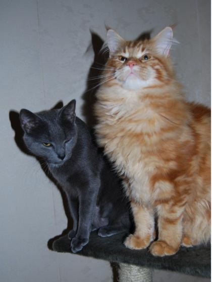 presentation des chats et de Osiris et cassiopee Cassio14