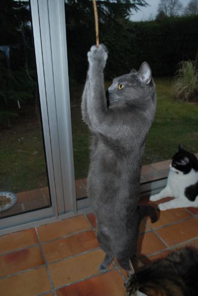 presentation des chats et de Osiris et cassiopee Dsc_8010