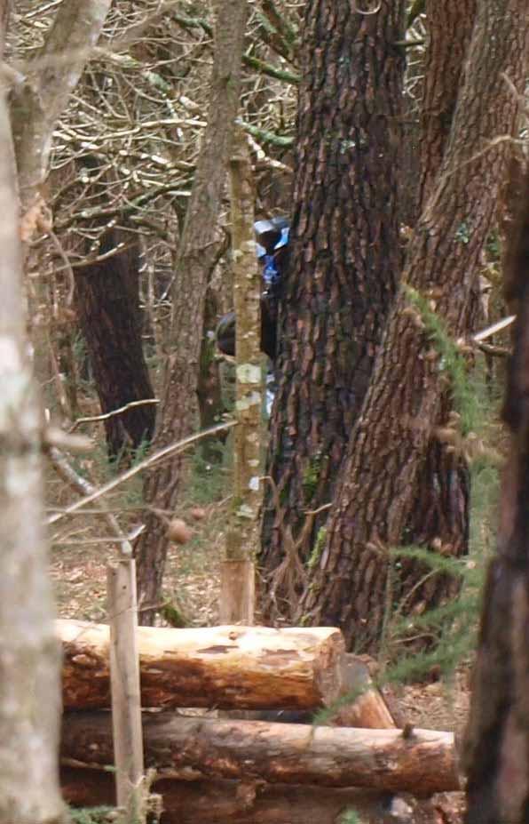 20 mars panam est dans les bois Snipin10