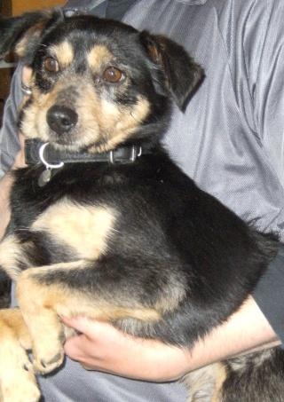 PACO, adorable petit x terrier, 5 ans env. Dscf6935