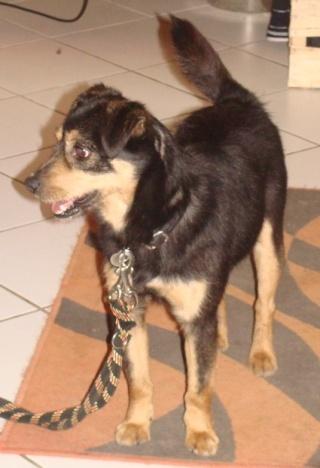PACO, adorable petit x terrier, 5 ans env. Paco_110
