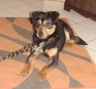 PACO, adorable petit x terrier, 5 ans env. Paco_210