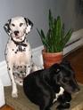Garde de chiens à long terme Noel_211